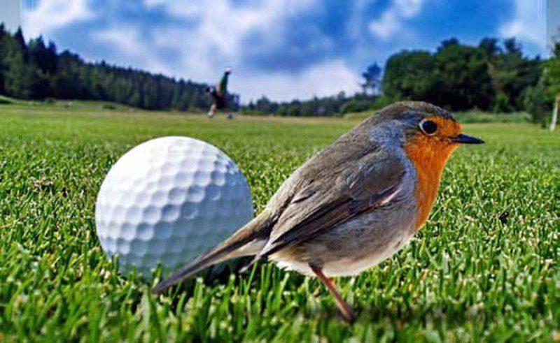 Sustainable golf